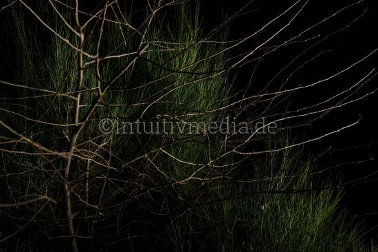 Heide Busch im Dunkeln