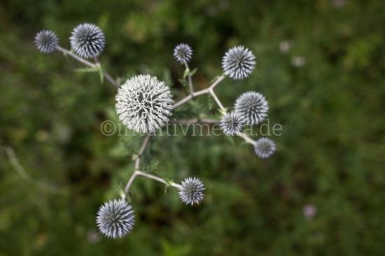 Blumen Symetrie