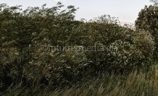 Wind in den Weiden