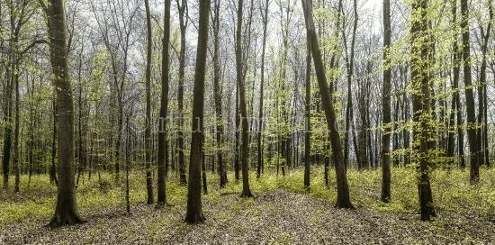 Wald Panorama im Frühling