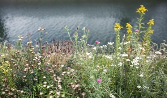 Wilde Blumen und Wasser