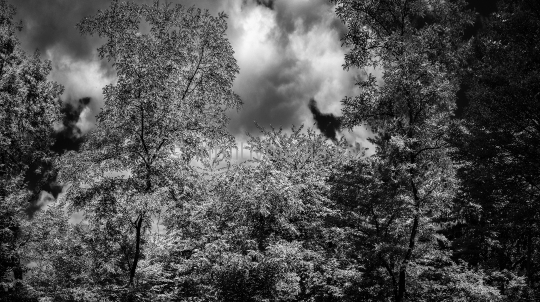 Baum Panorama