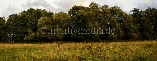 Bäume am Feldrand Panorama