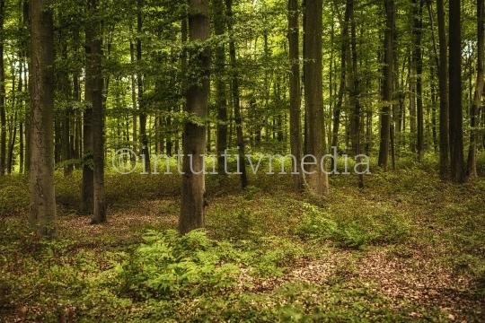 Baumstämme im Wald