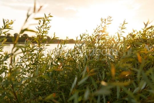 Rhein Fluß am Abend