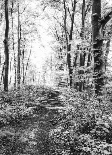 Wald Lichtung in Schwarzweiß