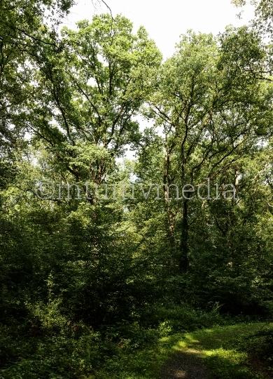 Eichen Wald