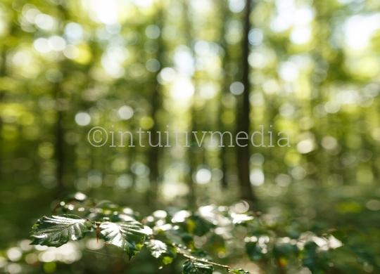 Wald nach dem Regen