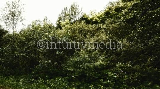 Busch, Wald & Bäume