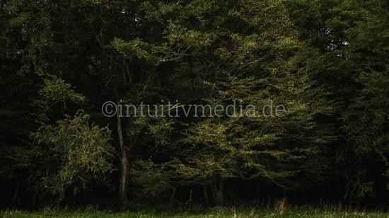 Waldrand mysteriöser Wald
