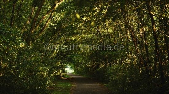 Wald & Bäume Panorama