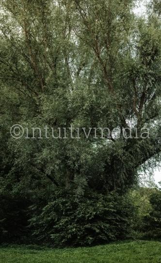 Baum Panorama: Weide
