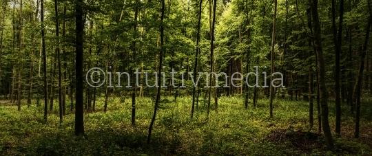 Grünes Wald Panorama