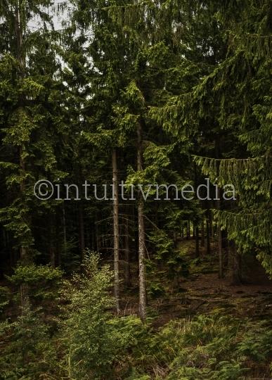 Waldrand mit Bäumen