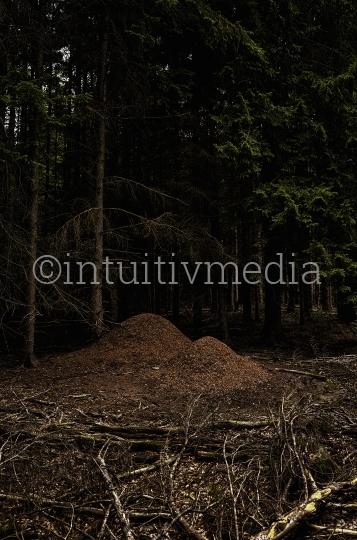 Ameisenhaufen im dunklen Wald