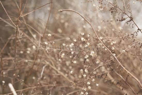 Braune Zweige