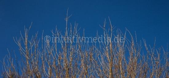 Zweige gegen dem Himmel