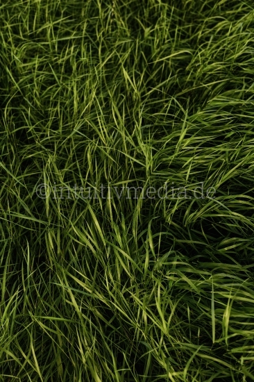 Grünes Gras - scharfe Textur