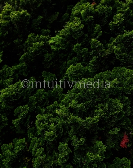 Wald & Bäume