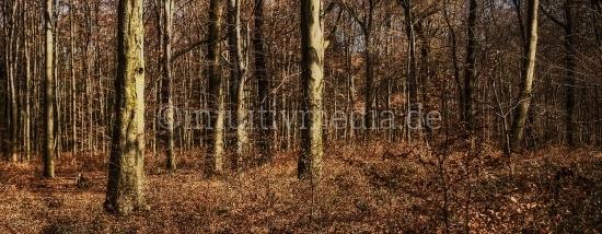 Herbstliches Waldpanorma
