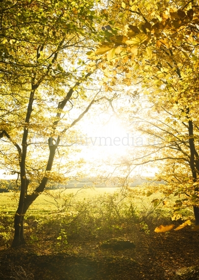 Goldenes Tor zum Herbst