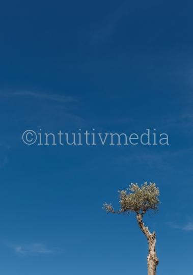 Baum mit Copyspace