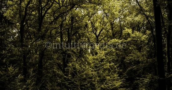 Wald Lichtung Panorama