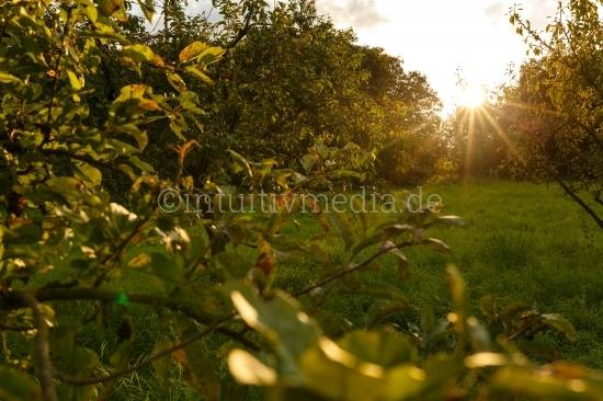 Obstgarten mit Gegenlicht