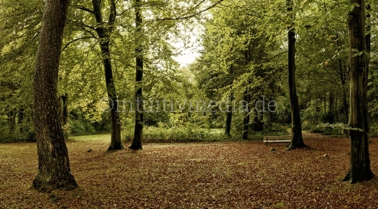 Wald Panorama fineart