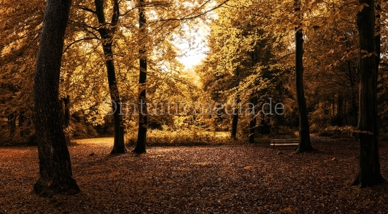 Herbst panorama im Wald