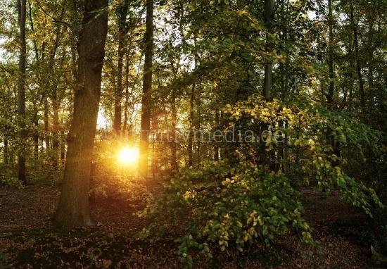 Wald im Abendlicht
