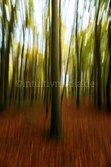 Baumstämme im Herbstwald