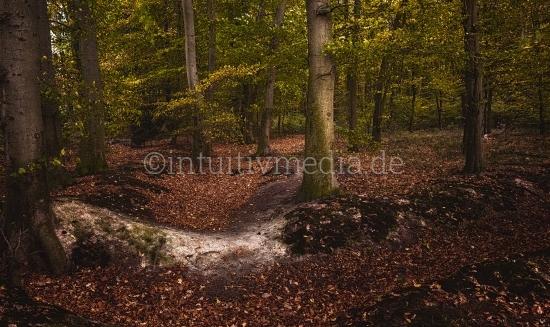 Wald Herbstlandschaft