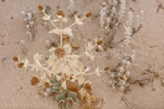 Blumen im Sand