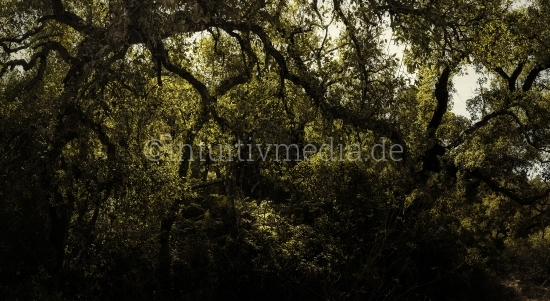 Stylisierte Naturfotografie: Wald