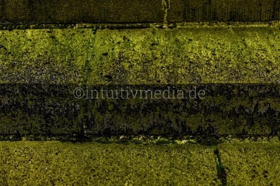 Steinwand mit grünem Pilz