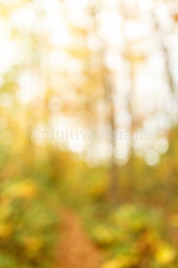 Bäume im Herbst unscharfer Hintergrund