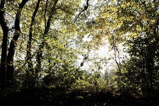 Wald im Gegenlicht