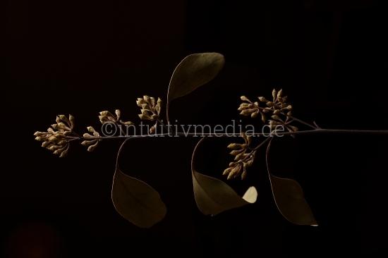 Schöne Pflanze vor Schwarz