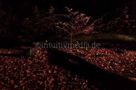 Wald im Regen