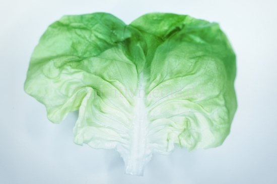Salat Blatt
