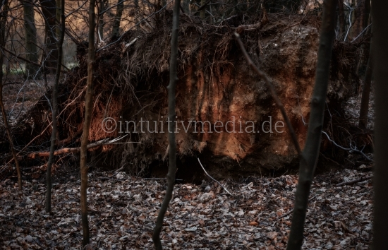 Entwurzelter Baum