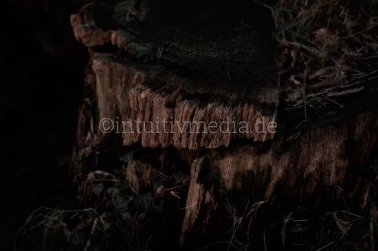 Detail eines Baumstumpfes
