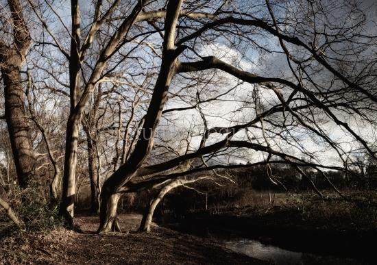 Bäume am Bach