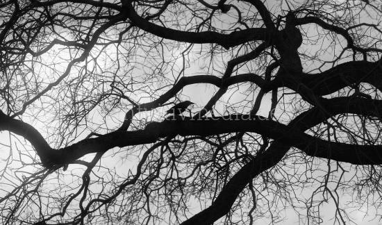 Baum Silhouette mit Vogel