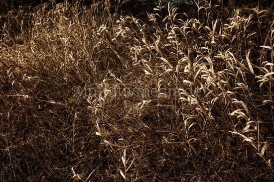 Braune Gräser