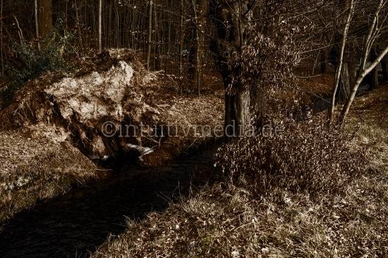 Entwurzelter Baum am Bach