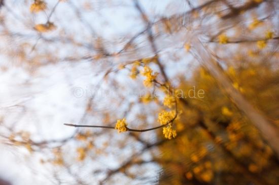 Unscharfe Blüten