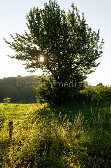 Baum im Sonnenlicht