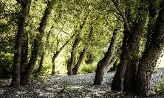 Bäume - Wilde Natur